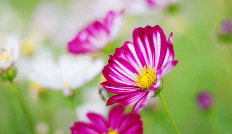 Cosmos with a refreshing of nature.