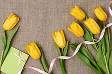 Tulips_228x152.jpg